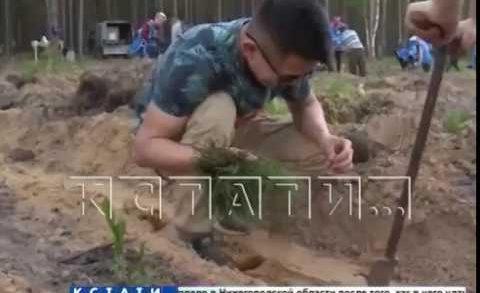 Почти миллион новых деревьев были высажены в Нижегородской области