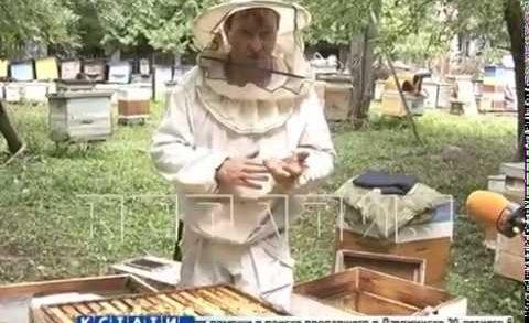 Массовая гибель пчел зафиксирована в Нижегородской области