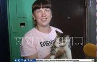 Нижегородские зоозащитники создали альпинистский отряд по спасению животных