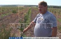 Первое промышленное производство тыквы и чеснока открыто в Воротынском районе