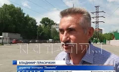 Транспортный коллапс возник вокруг Сормовского парка, после закрытия энергетиками авто-парковки
