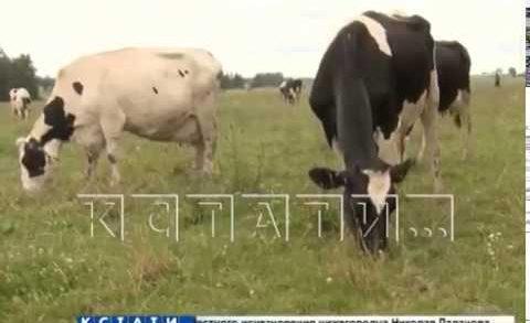 В областном сельском хозяйстве будут внедряться бережливые технологии