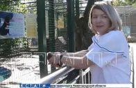 Раненый морской котик в нижегородском зоопарке