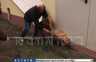 Охоту на дикую лису устроили в Нижегородском кремле