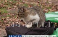 Крысиный яд — на бармена в нижегородском кафе с потолка упала крыса
