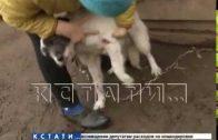 Ветврача из деревни Осинки соседи обвиняют в стрельбе по собакам