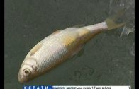 Мертвая рыба всплывает через лунки на озере в Кстовском районе