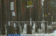 Незаконная реклама губит сосновую аллею в поселке Дубравном