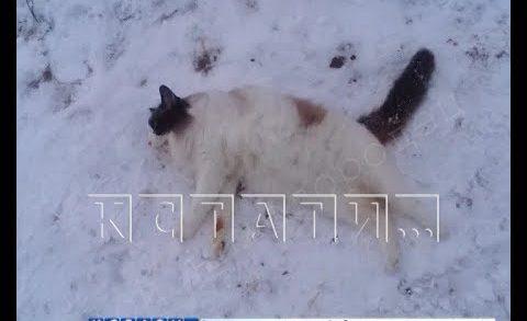 За убитого в воспитательных целях кота, соседи устроили живодерке подъездный самосуд