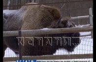 Зубр из зоопарка «Мишутка» переезжает в национальный парк Мещера