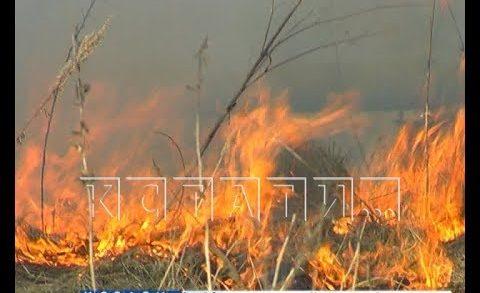 Горящий сезон — из-за первого пала травы в Борском районе загорелась свалка