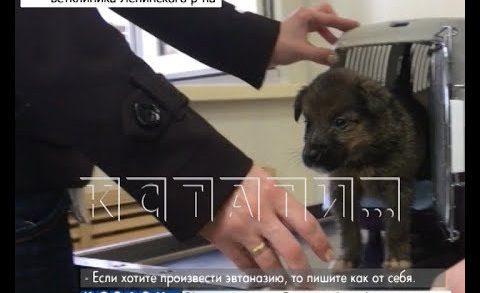 Нелегальная эвтаназия животных в нижегородских ветеринарных клиниках