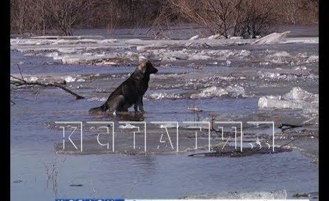 Несколько деревень оказались отрезаны от «большой земли» из-за паводка