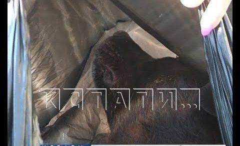 Собачье дело — жители Павлова обвиняют коммунальщиков в массовом убийстве собак