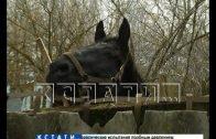 Узники лошадиного концлагеря после рабского труда могут пойти на мясо