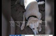 Черная передержка-зоозащитницу обвиняют, что она брала деньги на содержание собак, но собаки пропали