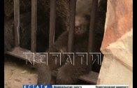 Тигры, медведи и макаки — новые нижегородцы родились в зоопарке