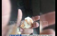 Цыпленок с 4 ногами родился у нижегородского фермера