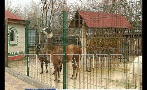 Голодающим зверям в зоопарках выделят помощь из городского бюджета