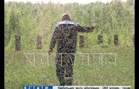 Комариное нашествие на берегах Горьковского моря — тучи насекомых облепляют машины и дома