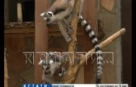 Нижегородские зоопарки получат помощь