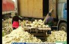 Тухлую капусту превращают в свежую за Бурнаковским продуктовым рынком