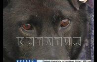 Дело о заказном убийстве собаки дошло до суда
