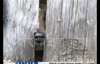Сарайный узник — в Арзамасе собаку уже 6 лет хозяева держат в сарае