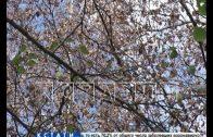 Неизвестные отравители на проспекте Гагарина закладывают яд в деревья