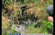 Нелегальная свалка химических отходов обнаружена в борском лесу