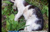 Звериная жестокость — дворового кота выкинули с балкона за то, что он помешал жителям