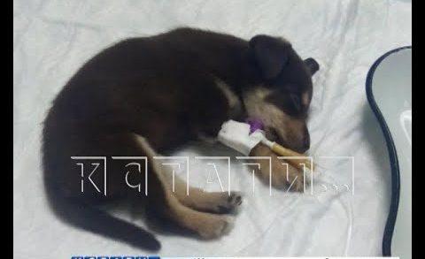Болезненный обман — смертельно больных щенков декоративных пород продают под видом здоровых