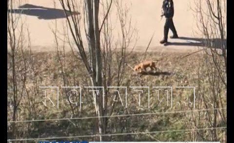 Над живодерами, мучившими свою собаку, устроили самосуд