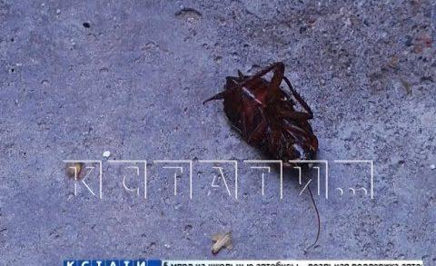 Тараканы, расплодившиеся от добра одних жителей, портят жизнь другим