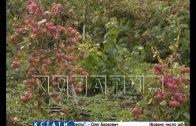Нижегородские садовые хозяйства вышли на российский рынок