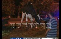 С помощью эвакуатора спасали корову, брошенную умирать на обочине дороги