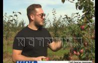 Садоводство будут развивать в Нижегородской области
