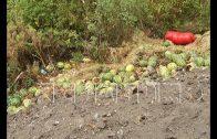 Свалку гниющих отходов неизвестные устроили на Московском шоссе