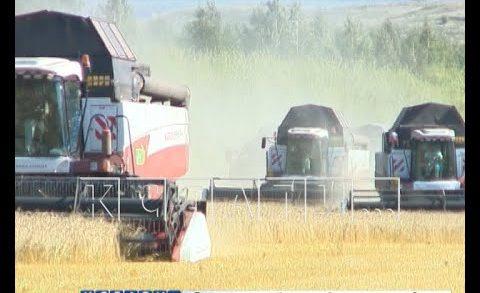 Урожай зерна 2020 года может на 30 процентов превзойти прошлогодний