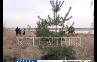 Центром компенсационного озеленения стала Волжская набережная