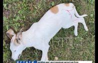 Догхантеры расстреляли собак в Борском районе