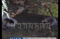 Малые реки начали приводить в порядок в Нижнем Новгороде