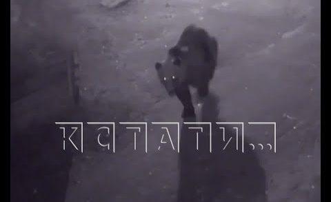 Переживший нападение медведя мужчина, на радостях устроил пьяный дебош и попал в тюрьму