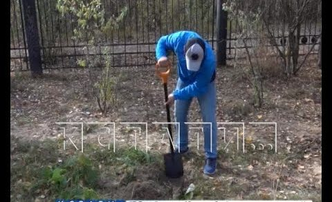 Повторное озеленение Светлоярского парка