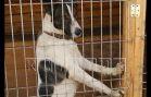Прибыльный бизнес на собаках довел хозяйку приюта до госпитализации