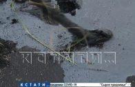 Разлили и забыли — 2 года не ликвидируют озеро мазута, образовавшееся после разрыва нефтепровода
