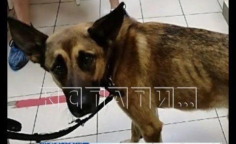 Собачье дело — нижегородка отдала питомца на лечение, а назад забирает с боем