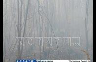 Жители поселка Ситники задыхаются от дыма торфяных пожаров