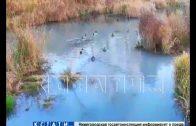Сточная река в Павлове — в родниковую воду начали сливать канализацию