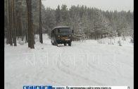 Елки в нижегородских лесах взяли под новогоднюю охрану